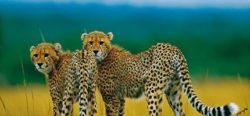 enter to win wildlife safari africa
