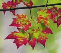 Five best U.S. destinations for fall foilage colors