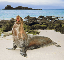 Sweepstakes to win free vacations in 2012 to Japan, Galapagos, Mexican Riviera