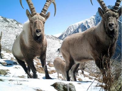 UNESCO Biosphere Reserve Kazakhstan @ecoxplorer