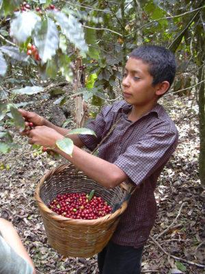 UNESCO Biosphere Honduras @ecoxplorer