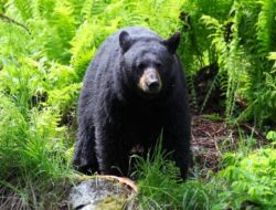 5 Best National Parks for Wildlife Viewing