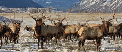 wildlife safaris USA@ecoxplorer