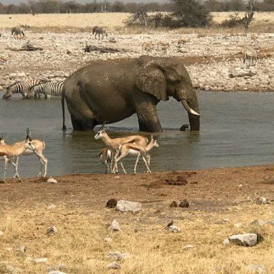 Namibia_(C) Evelyn Kanter_Etosha National Park