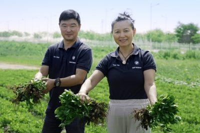 BMW peanut farm