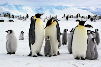 visit antarctica virtually